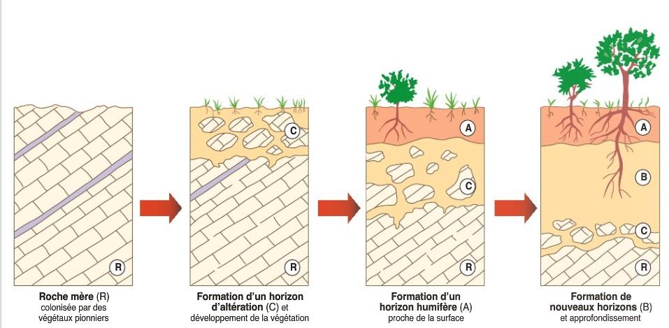 Bouvattier sch ma formation du sol blog d svt 2nde notre dame - Remontee d humidite par le sol ...